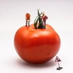 tomato-546989_640
